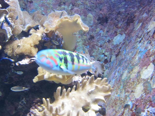 2・水族館カラフルな魚.JPG