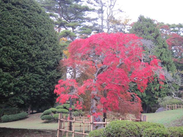 2・香雪園紅葉5.JPG